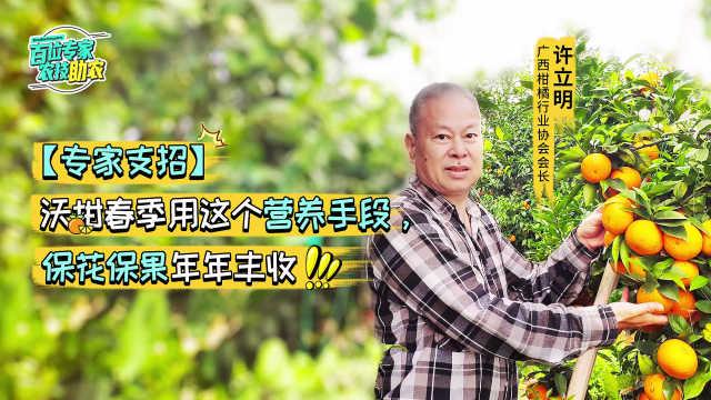 沃柑立体挂果,春季这样保花保果管理年年丰收!