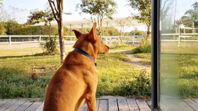 小伙丢失爱犬找到时已成冰冻肉块:杀狗者称吃狗肉治哮喘