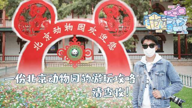 周末想出来溜达?北京动物园的游玩攻略有必要了解一下