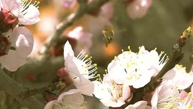来西海岸新区铁山街道杨家山里听花朵绽放的声音