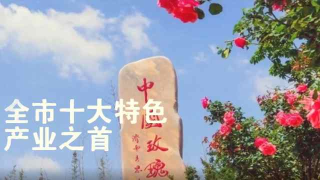 平阴玫瑰丨静候一朵花开