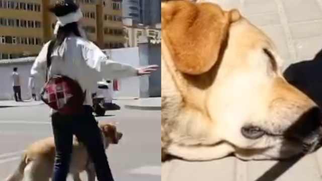 太原公交回应交警带导盲犬被赶:通报全公司,加强培训