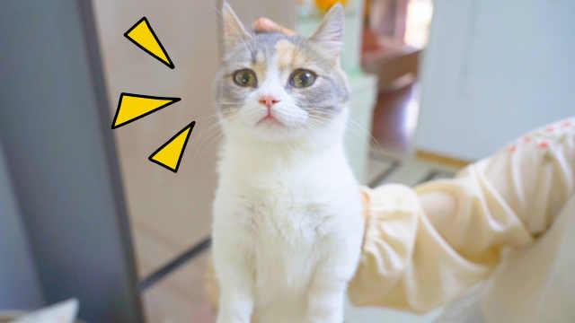 猫突然被捏住后颈皮,会有什么反应?猫:定住了!