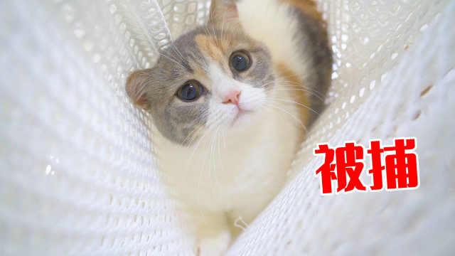 主人自制抓猫陷阱,猫咪全部落网,猫:套路好深!