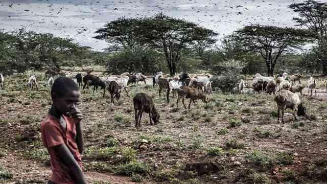 第二波蝗灾席卷东非,或比第一波严重20倍,联合国发出警告