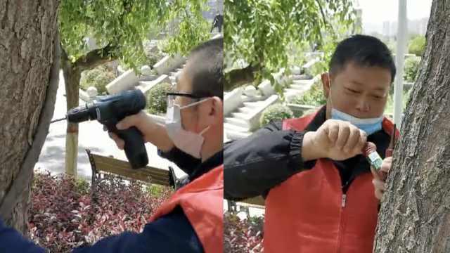 兰州为黄河沿线柳树打针,市民:柳絮少了,不怕犯鼻炎