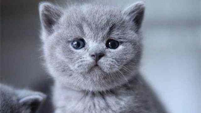 最新研究:新冠病毒可以猫传猫,建议少让猫出门