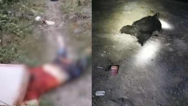 妇女送儿子返校遭黑熊咬死,俩村民进山搜救也遇害