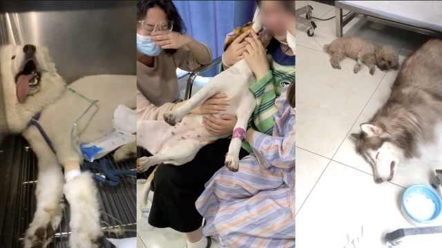 成都15条宠物犬被毒死,主人抱狗痛哭,警方以寻衅滋事罪立案