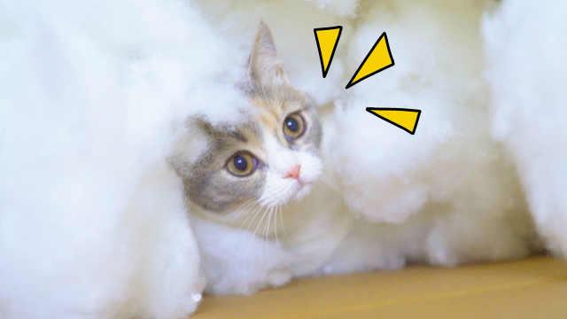 把猫咪丢进棉花堆里,会发生什么?猫:陷进去了!