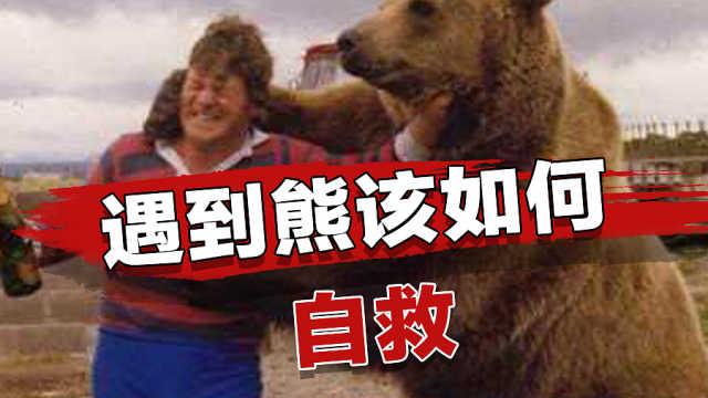 遇到熊装死有用吗?熊到底有多聪明