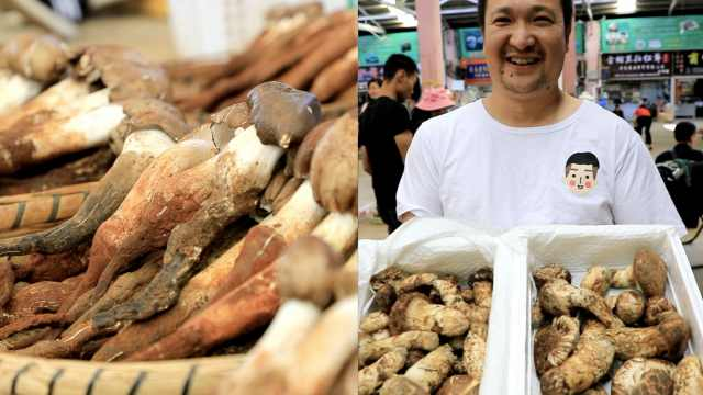 吃货福利!全国最大野生菌市场日销量暴增,松茸每公斤过万