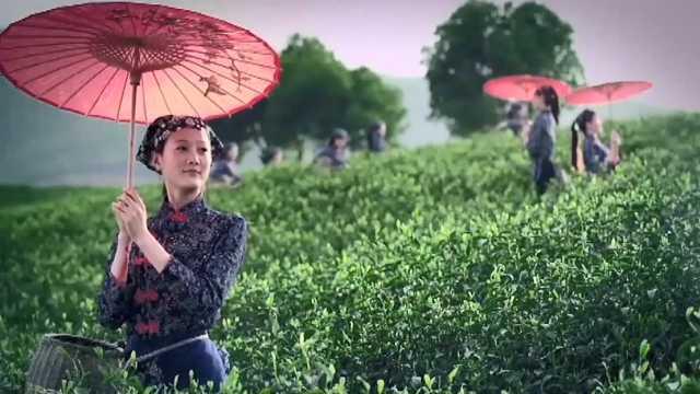 楚楚碧叶新,采茶姑娘带你领略舞钢茶园风光