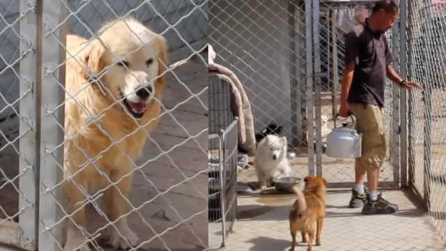 大叔10年收养上千只流浪猫狗,最大愿望是救助站关门