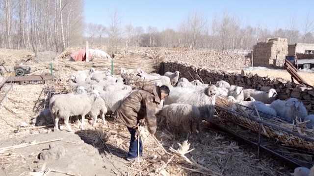【内蒙古】因病致贫户如何脱贫?这村推行菜单式养羊帮扶办法