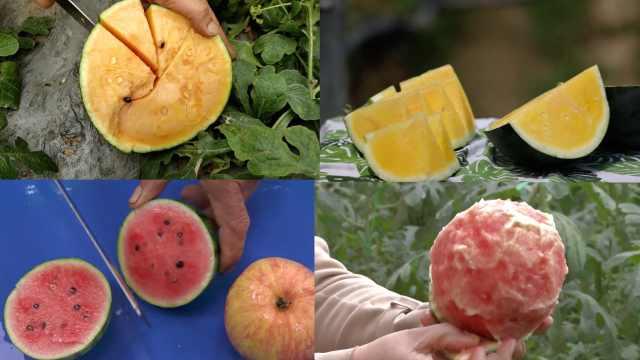还感觉吃瓜麻烦吗?四种特色西瓜助你慵懒度过夏天