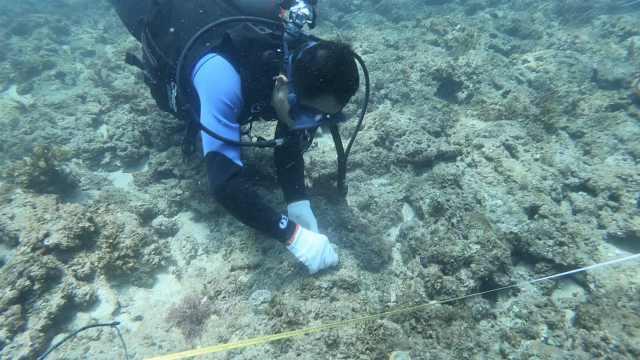 我在深圳海底种珊瑚:恢复昔日美丽,还需要几代人努力