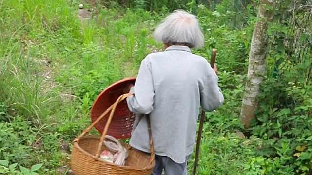 一篮一杖一斗笠!93岁老人独步深山摘杨梅,95后追不上:走太快