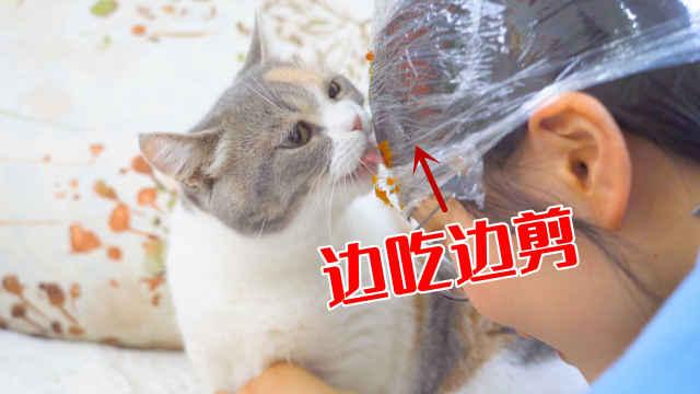 在头上涂食物,可以顺利给猫咪剪指甲?猫:想得美!
