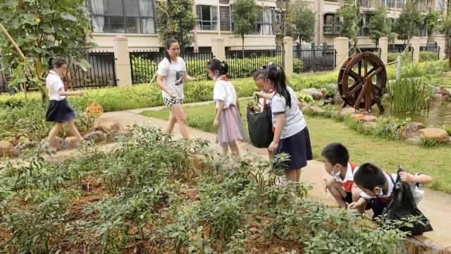 湖南一小学给每个班分了块菜地:学生自己种自己卖