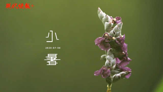 与水相依,南京紫金山小暑也清凉