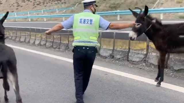 两毛驴上高速司机纷纷刹车避让,民警一手一个