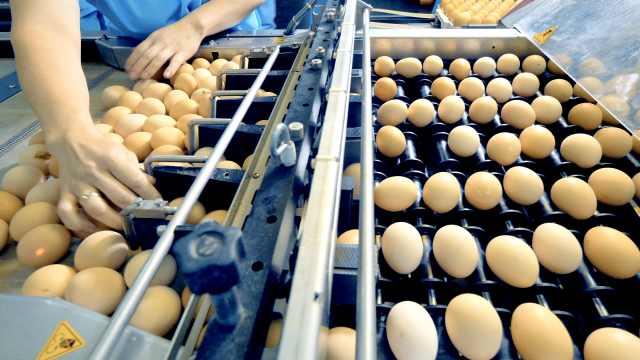 真·锦鲤体质!女孩抽奖中1.4万个鸡蛋,将捐1万个鸡蛋做公益