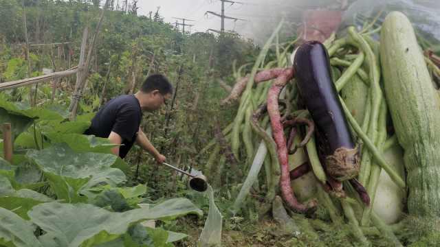 作家花千元上重庆南山租地种菜6年,写10万字书记录田园生活