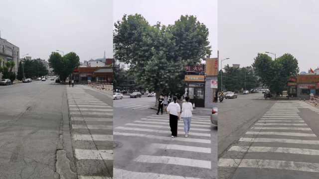 大连街头现天然心形树,园林工人:没刻意修剪