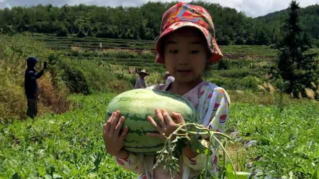 爸爸暑期带女儿选瓜摘瓜卖西瓜:顾客给多少就