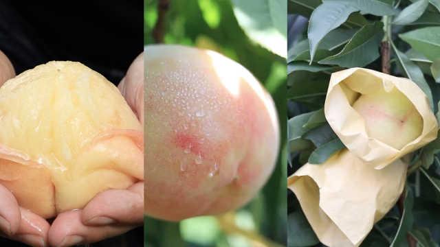 吃货纷争| 舌战江浙沪!水蜜桃之乡究竟在哪里?