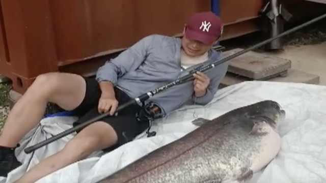 鲶鱼成精!市民钓到1米5长66斤大鲶鱼:打算放归
