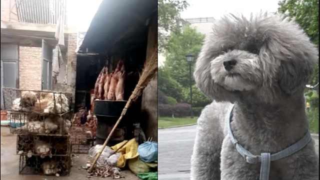 吃货纷争|爱狗和吃狗,两者冲突吗?