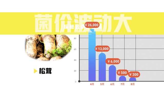 探秘云南野生菌市场:卖菌似炒股,1天1价涨跌,3月内万元到百元