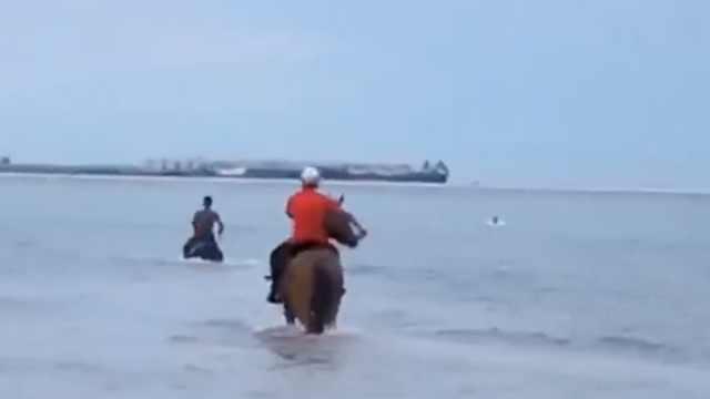 冲进海里救人的两匹马去世,马主人:有点可惜,但不后悔救人