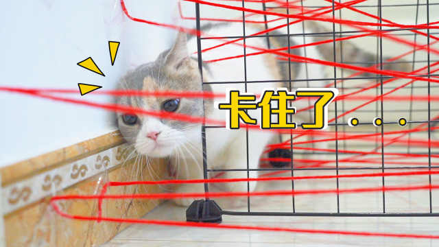 在猫前面系满红线,猫能不能成功避障?猫:卡住!