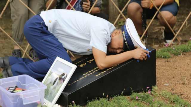 参加玉树救援的功勋犬天宝去世,训导员趴墓碑痛