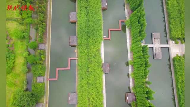 """沿江披上生态绿,如皋长青沙岛上种出""""金饽饽"""""""