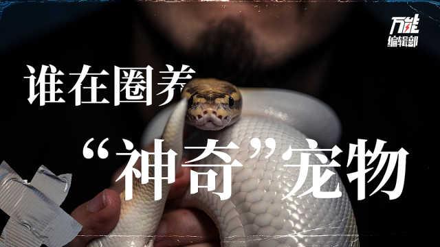"""宠物蛇、乌龟、蜥蜴,谁在圈养""""神奇动物""""?"""