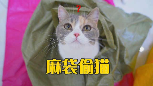 突然有人拿着麻袋来我家偷猫,猫会不会被偷走?