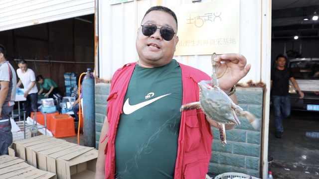 最强梭子蟹争夺人!丰收季每天只睡3小时,声音吼到沙哑