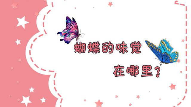 X星人说:蝴蝶的味觉在哪?
