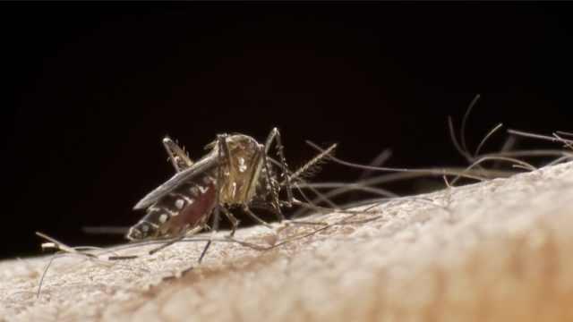 从治疗疟疾到防治新冠,特朗普钦点的羟氯喹是如何诞生的?