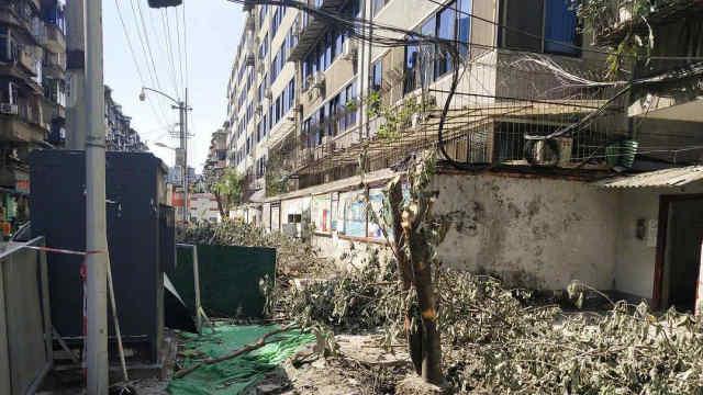 成都桂花树被砍处理结果:罚款50万元,多方被追责