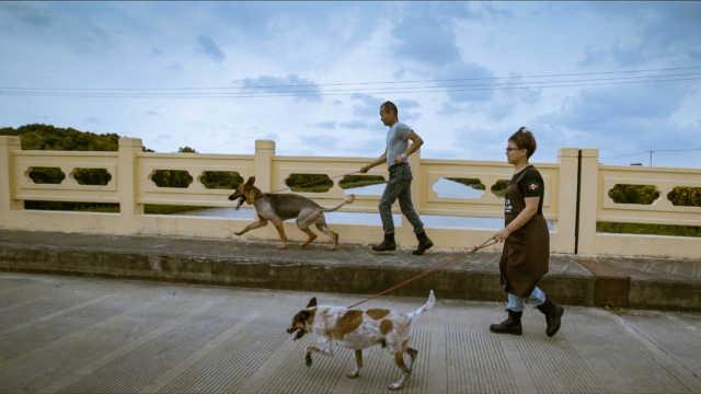 爱心人士在上海郊区建动物救助基地,养300条流