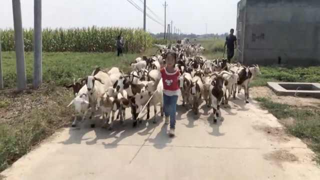 """夫妻俩为陪孩子返乡创业养羊,7岁女孩成羊群""""领头羊"""""""