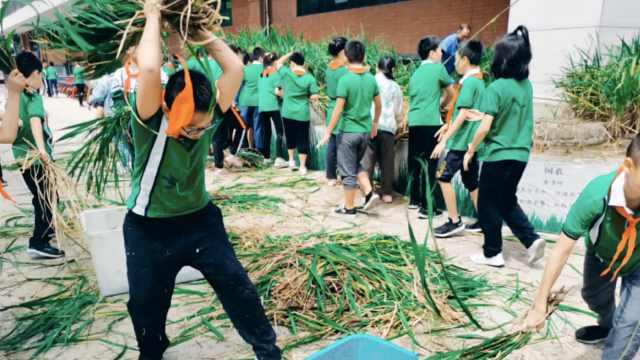 人家小学有稻田!成都一小学学生亲手插秧收割,老师全程记录