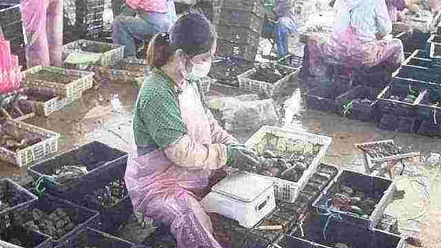 探访荣成鲍鱼养殖地:走出了价格最低点,由20元涨到40元