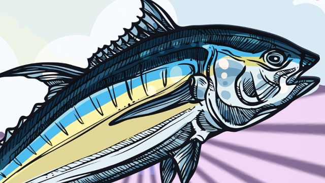 为什么金枪鱼不游动就会死?