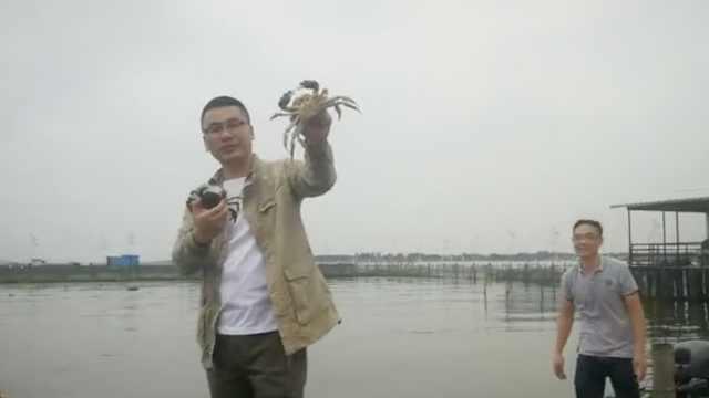 阳澄湖大闸蟹开捕:产量和品质有提升,计划推出7两大规格蟹